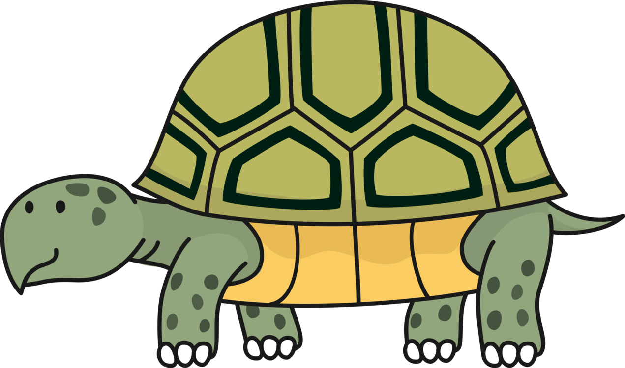 Turtle Reptile Desert Tortoise Russian Tortoise Gopher.