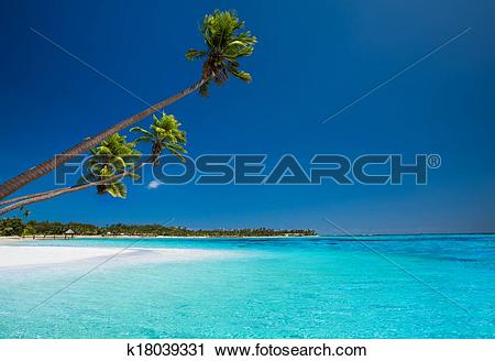 Stock Photography of Few palms on deserted beach of tropical.