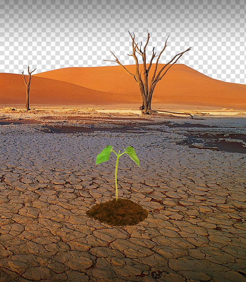 Drought Natural disaster Water Desertification, Lack of.