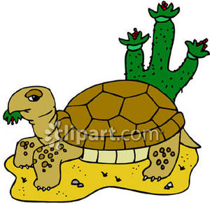 The best free Tortoise clipart images. Download from 138.