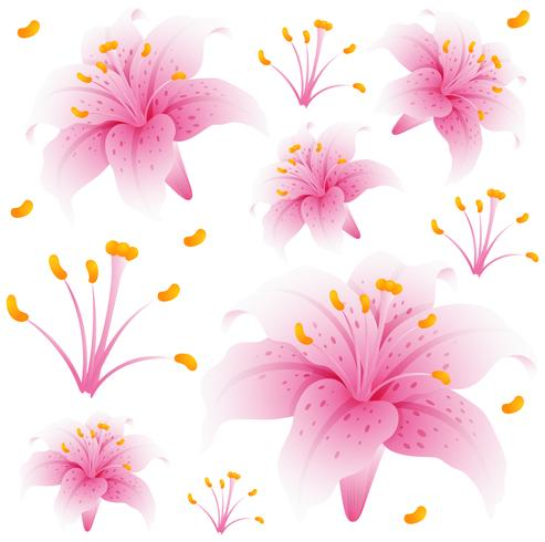 Seamless background design with pink lily flowers.