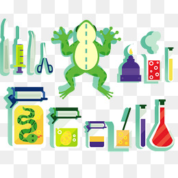 Dissected Frog Clipart.