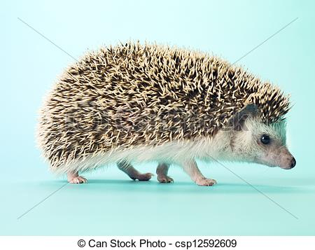 Stock Photography of detail view of hedgehog.
