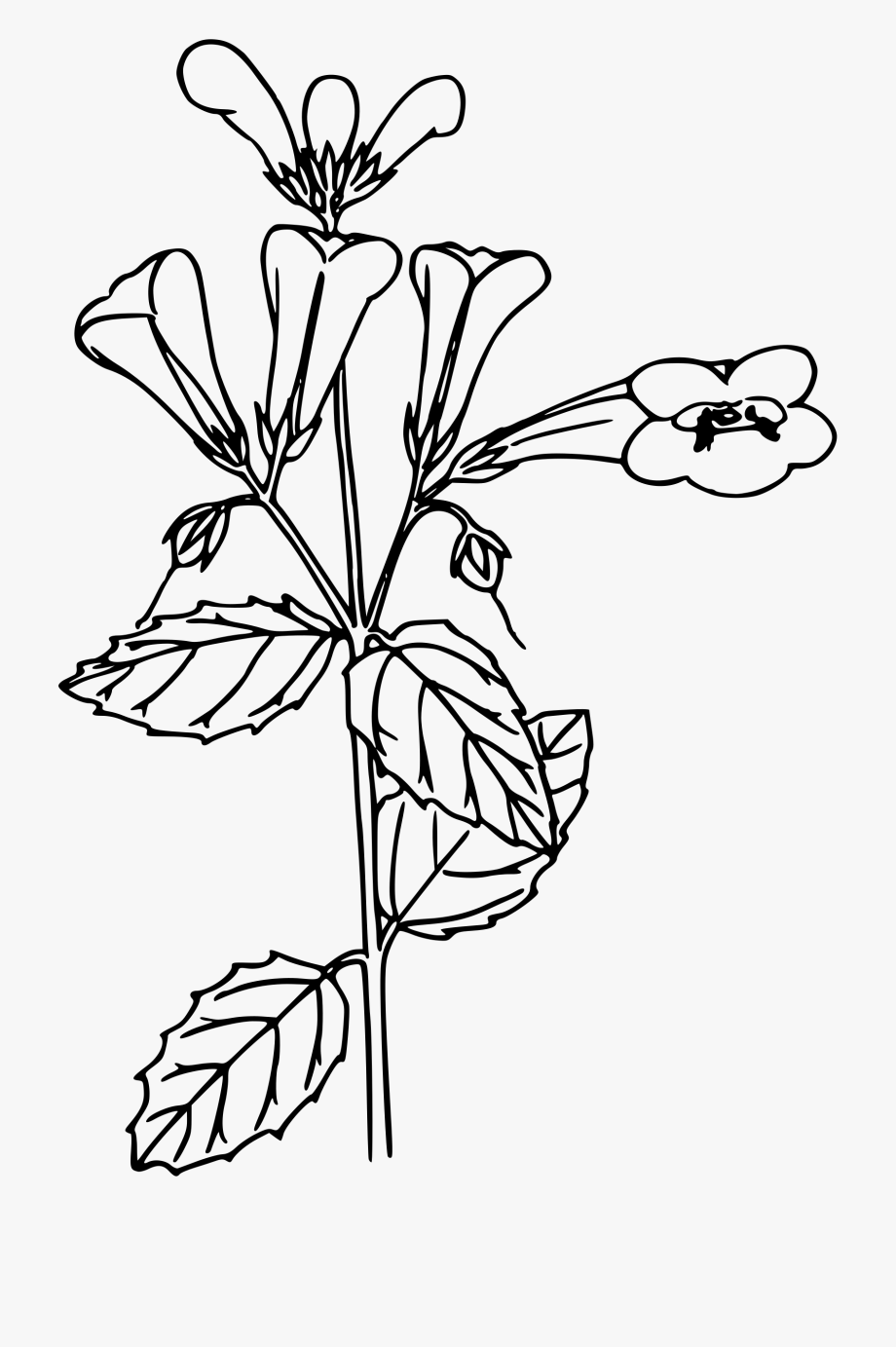 Vintage Flower Clipart Woodland Flower.