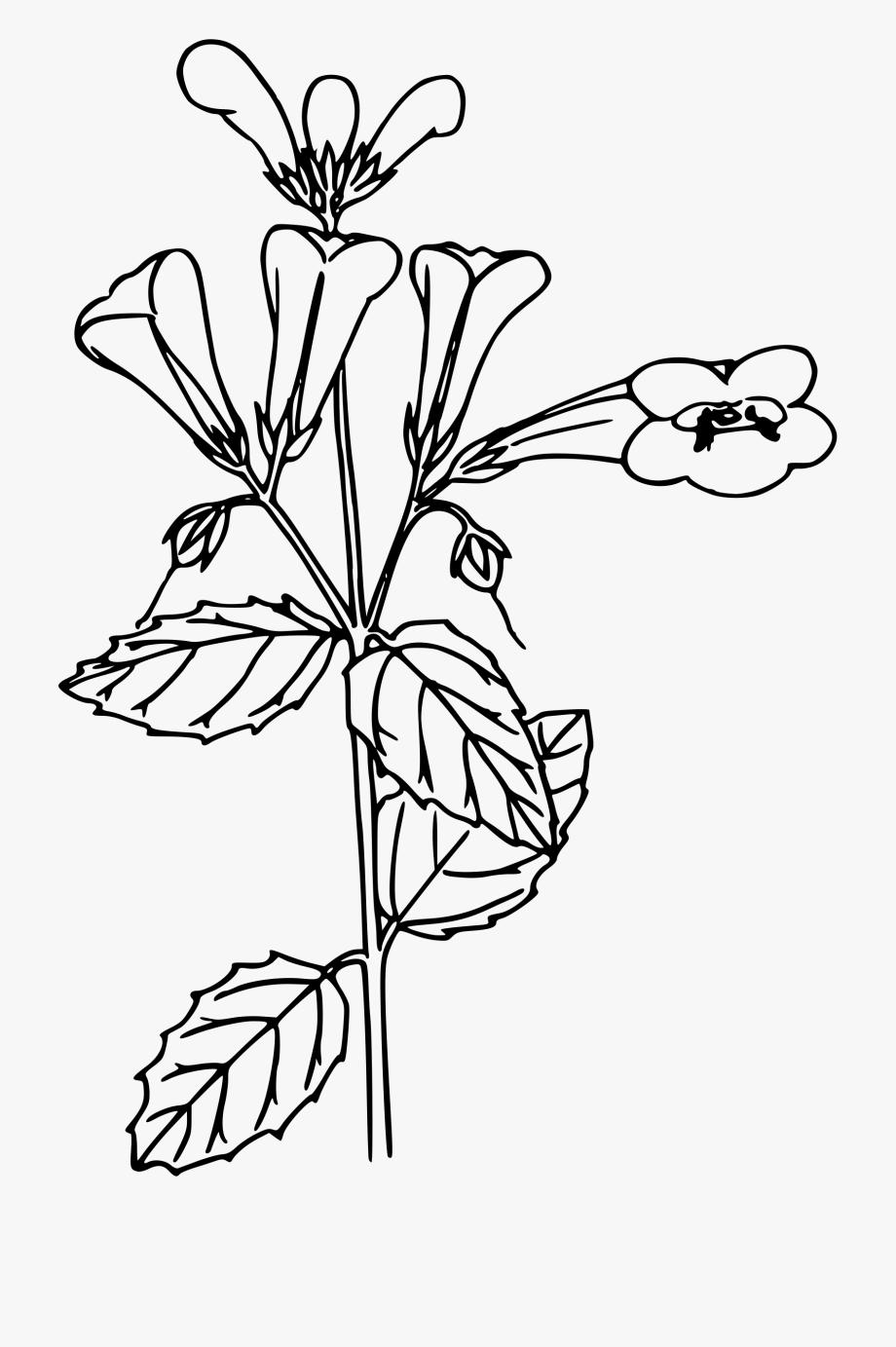 Vintage Flower Clipart Woodland Flower.