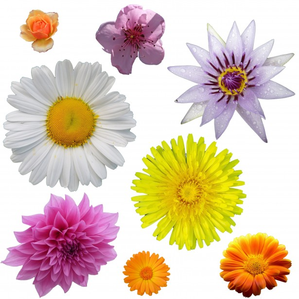 Free Realistic Flowers Cliparts, Download Free Clip Art.