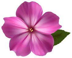 48 Best flower cliparts images.