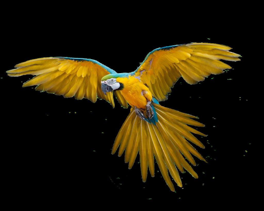 Png Bird by Moonglowlilly.deviantart.com on @deviantART.