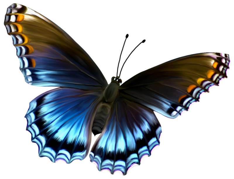 deviantART: More Like Beautiful Blue and Brown Butterfly PNG.
