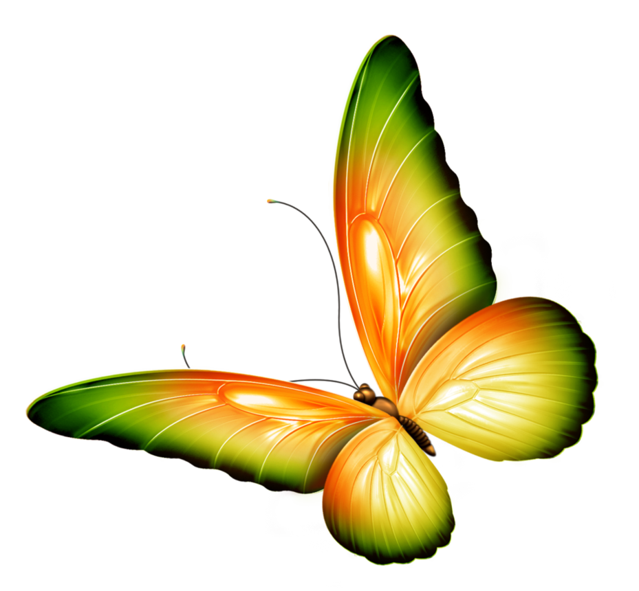 Yellow and Green Transparent Butterfly Clipart by zwyklaania on.