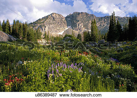 Picture of Landscape of Little Cottonwood Canyon, with the Devil's.