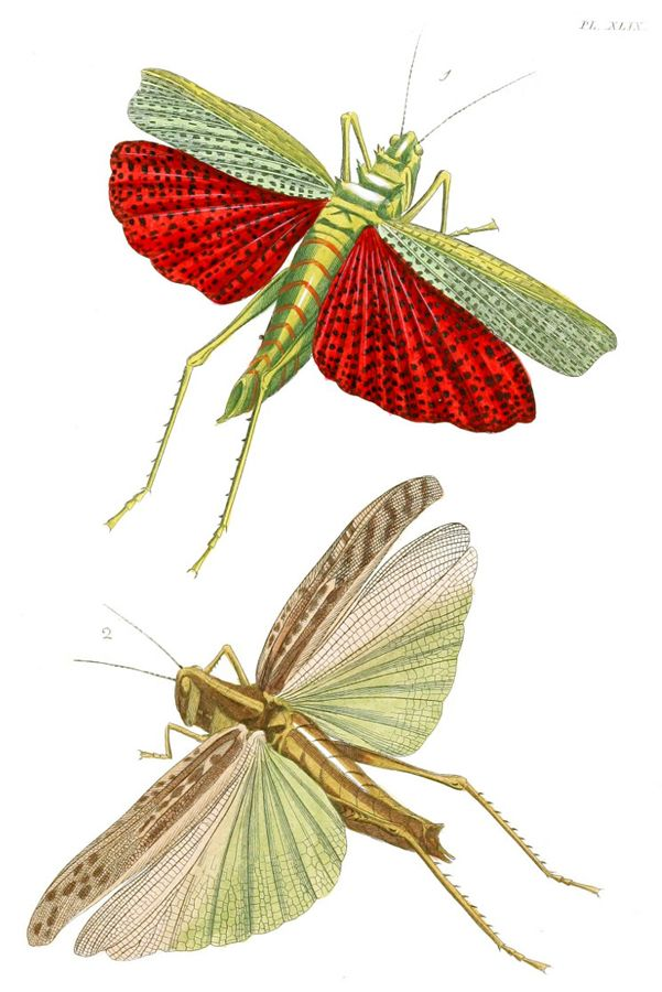 1000+ ideas about Grasshopper Pictures on Pinterest.