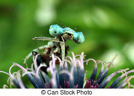 Pictures of Devil's darning needles flowers.