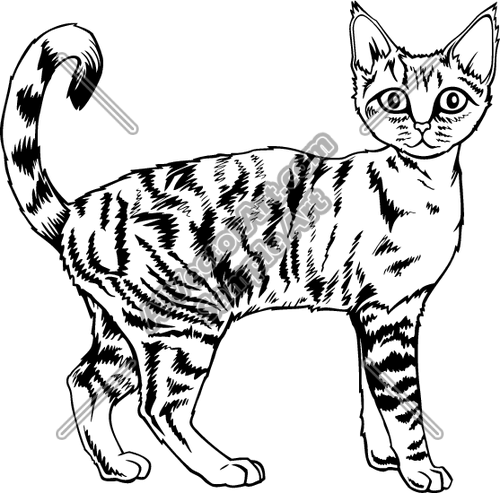 Devon Rex Cat Clipart and Vectorart: Animals.