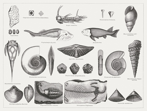 Devonian Clip Art, Vector Images & Illustrations.