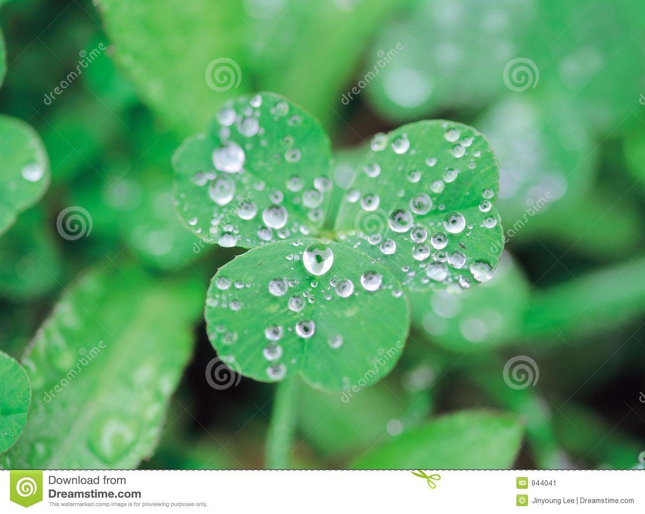 Dew Clip Art.