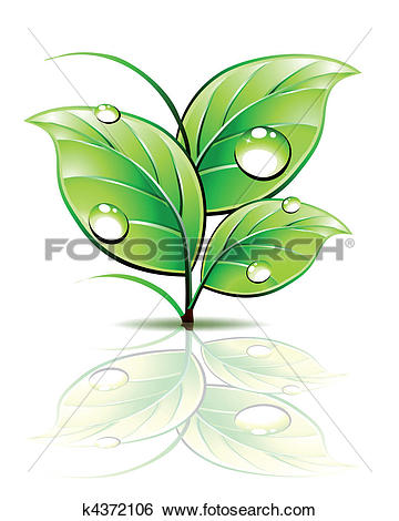 Clip Art of Branch of sprout with dew on green leaves. Vector.