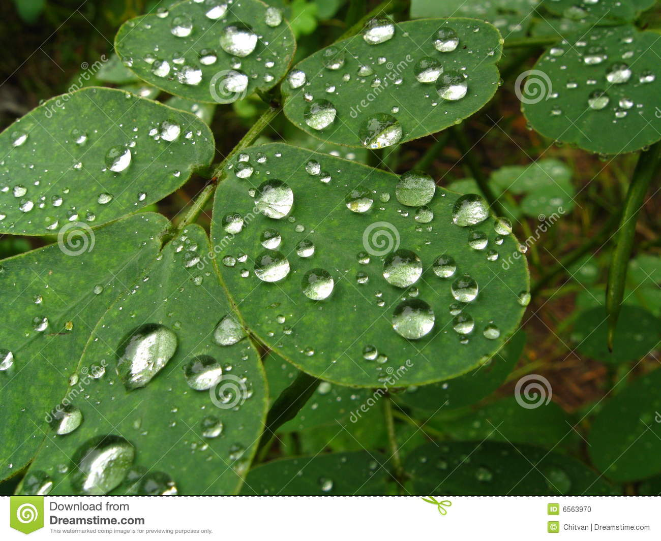 1000+ images about ❤ Dew Drops on Pinterest.