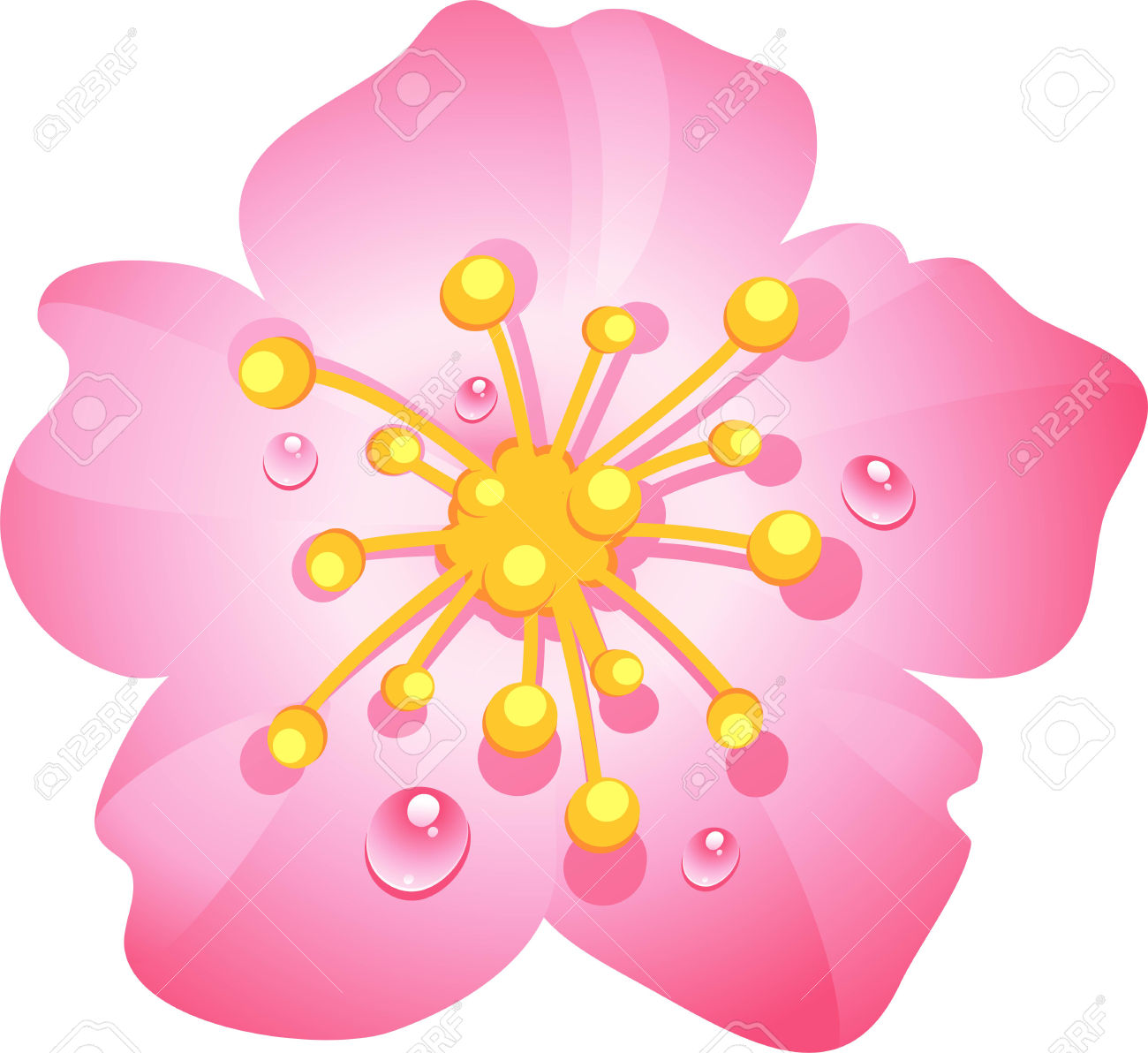 Pink Cherry Flower With Dew Drops. Eps 10 Royalty Free Cliparts.