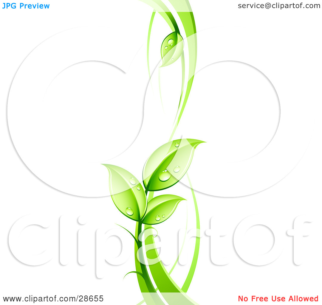 Clipart Illustration of a Lush Green Vine With Dew Drops On The.