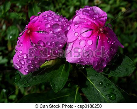 Stock Photography of Twin Flowers.