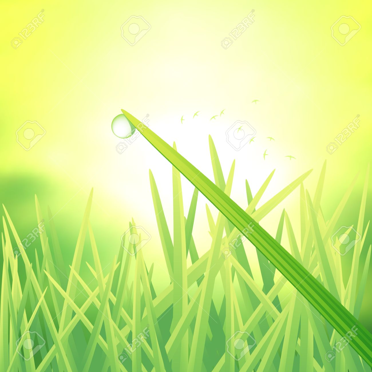 A Single Dew Drop On A Blade Of Grass. Vector Illustration.