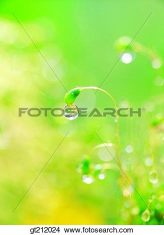 Stock Photo of waterdrop, grass, meadowtrunk, stem, raindrop, dew.