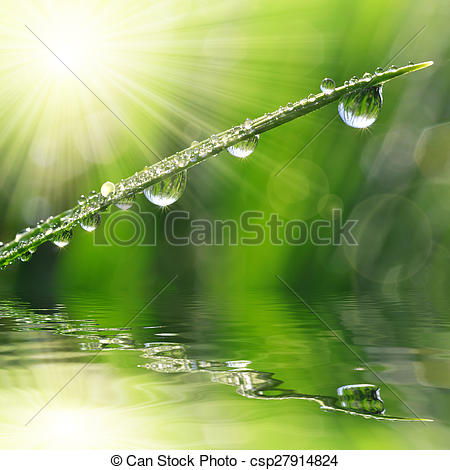 Stock Photo of Fresh green grass with dew drop closeup. Nature.