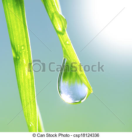 Stock Photos of Grass with dew drop.