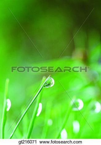 Stock Photography of waterdrop, raindrop, dew, dewdrop, grass.