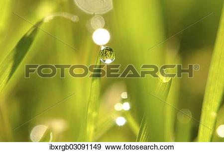 Stock Photograph of Grass with dew drop ibxrgb03091149.