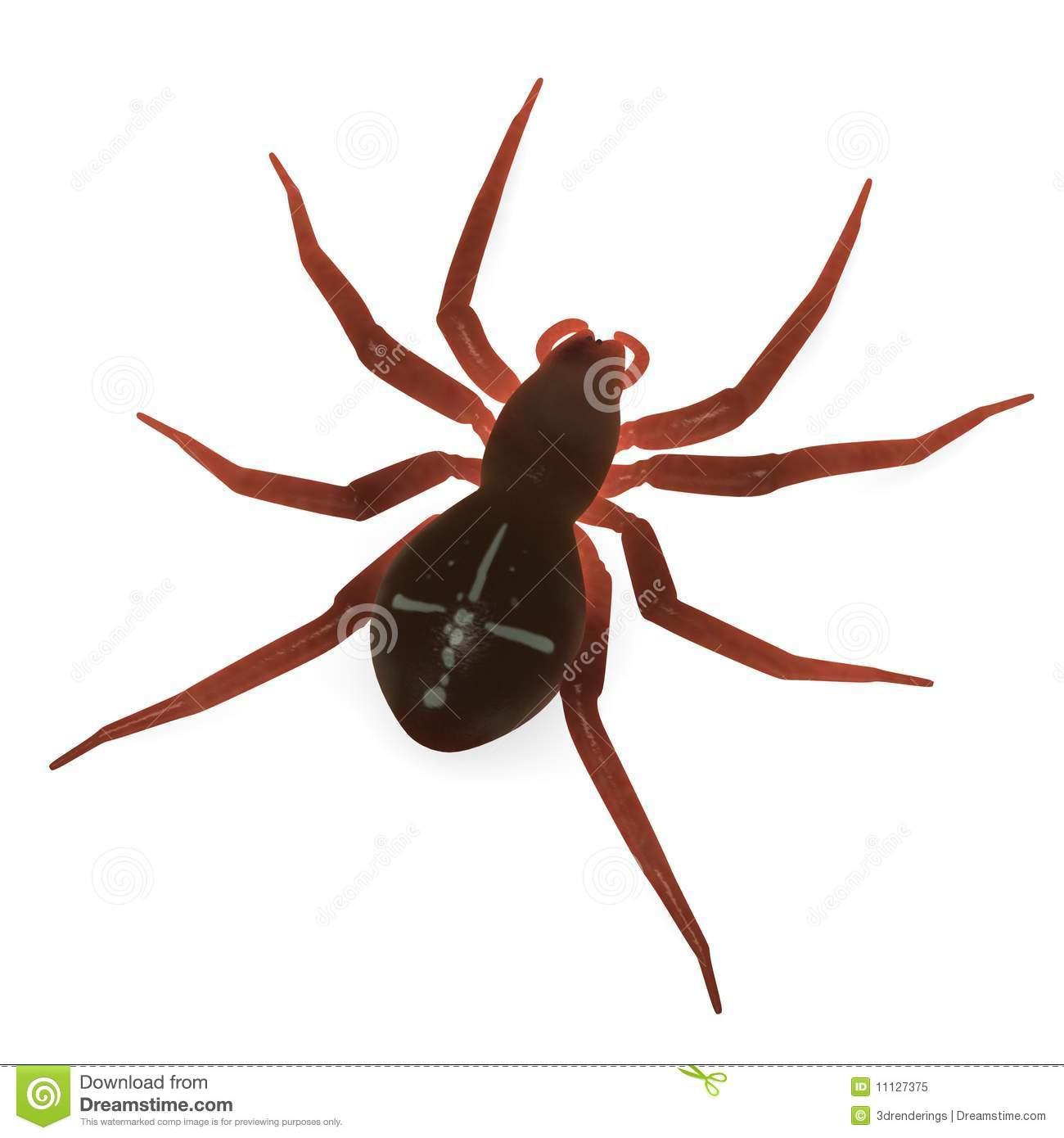 Araneus Diadematus Royalty Free Stock Photo.