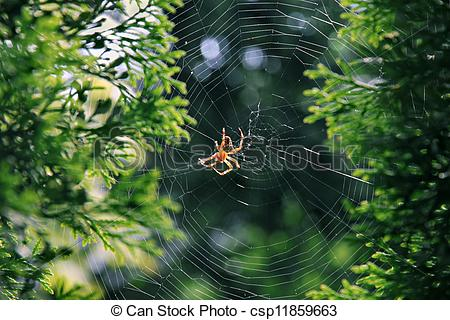 Stock Image of Garden spider (Araneus diadematus)..