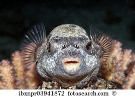 Swellfish Stock Photo Images. 120 swellfish royalty free images.