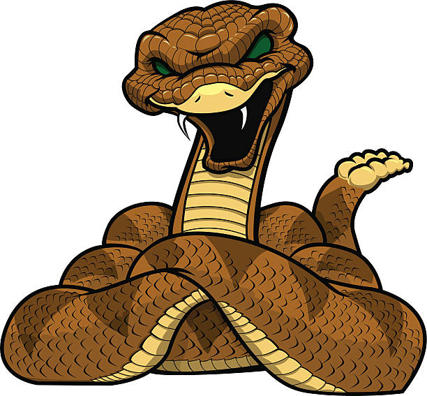 Diamondback Rattlesnake Illustrations, Royalty.