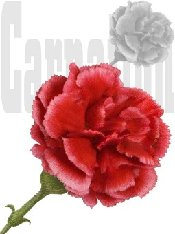 Carnation, Dianthus Caryophyllus clipart / Free clip art.