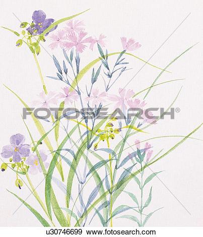 Stock Illustration of Dayflower and dianthus u30746699.