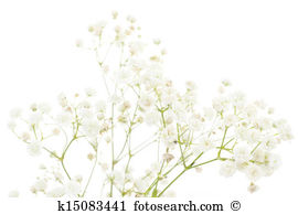 Dianthus Illustrations and Clip Art. 11 dianthus royalty free.