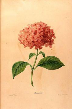 Fruit, Paris and Public domain on Pinterest.