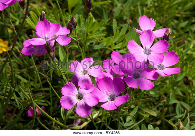 Three Vegetation Botany Stock Photos & Three Vegetation Botany.