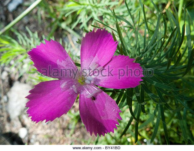 Three Vegetation Botany Stock Photos & Three Vegetation Botany.