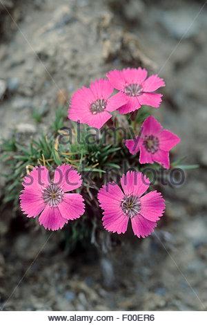 Pink Eye Stock Photos & Pink Eye Stock Images.