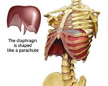 Middle Back Pain.