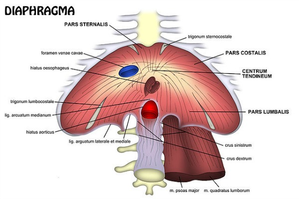 Diaphragm Pain.