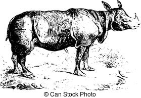 Clip Art Vector of Black Rhinoceros or Diceros bicornis vintage.