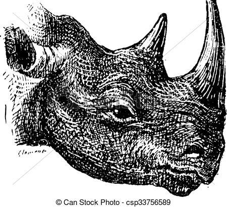 Vector of Black Rhinoceros or hook.