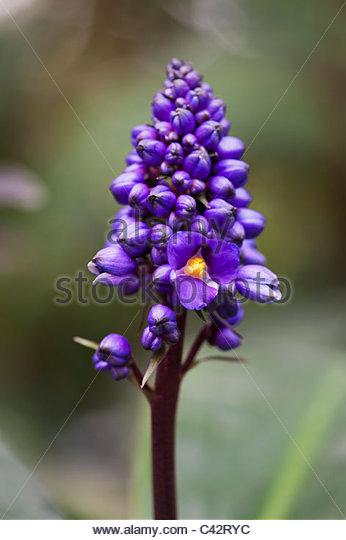 Tropical Gardening Stock Photos & Tropical Gardening Stock Images.