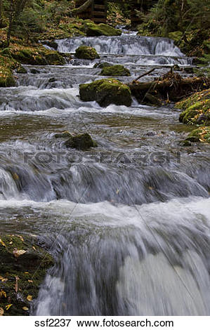 Picture of Beautiful brook at Dickson Falls, Fundy National Park.