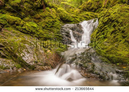 New Brunswick Forest Stock Photos, Royalty.