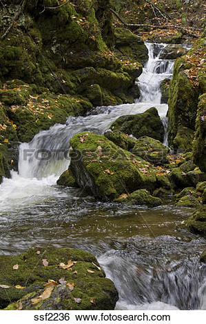 Stock Images of Stream flows over moss covered rocks, Dickson.